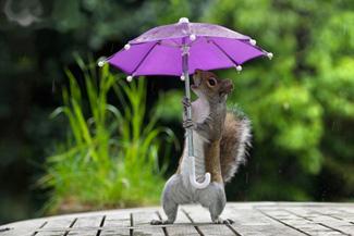 белка и зонтик прикольное фото